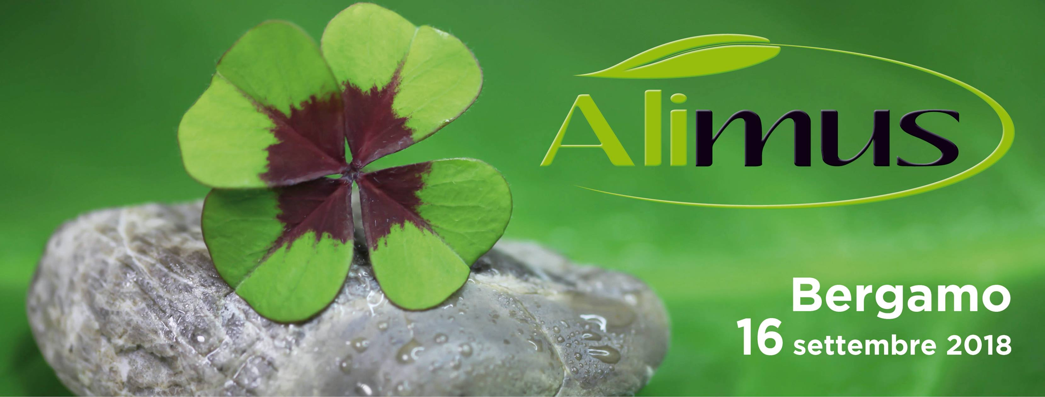 Alimus